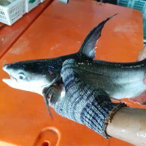 Ah Lau Food King   fish patin 10