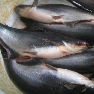 Ah Lau Food King   fish patin 5