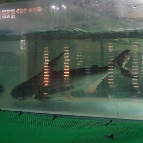 Ah Lau Food King | fish patin 7